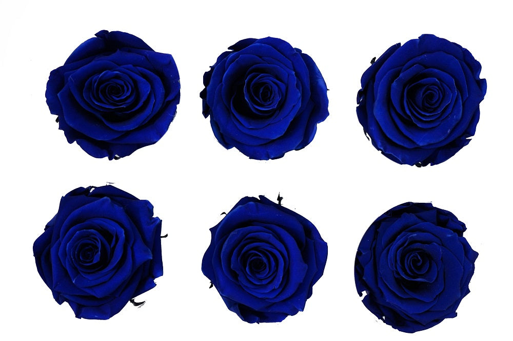 Large: Royal Blue   Preserved Rose * Box of 6 Preserved Rose Heads