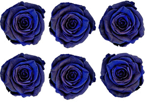 Large: Royal Blue Pearl Preserved Rose *Box of 6 Preserved Rose Heads