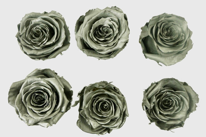 Large: Silver Preserved Large Rose * Box of 6 Preserved Rose Heads