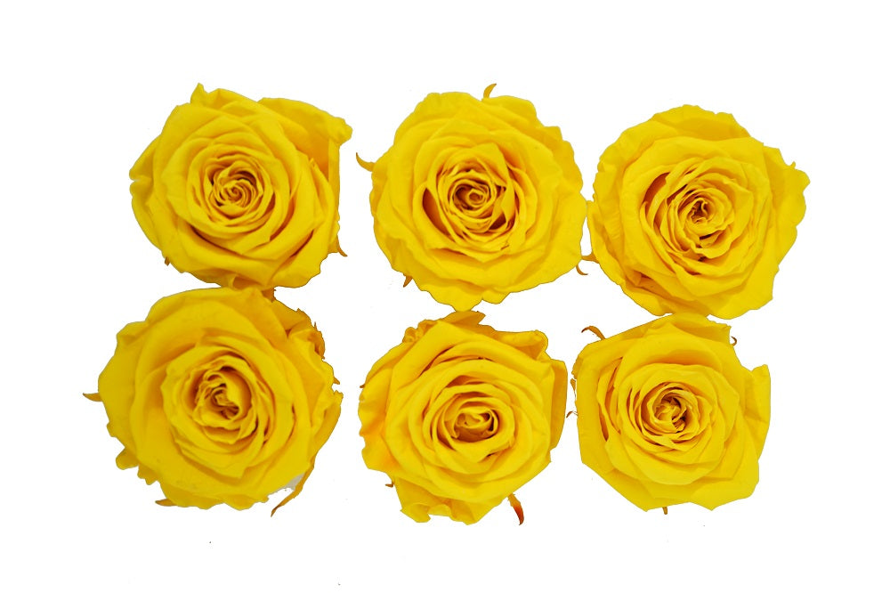 Large: Sun Yellow Preserved  Rose L * Box of 6 Preserved Rose Heads