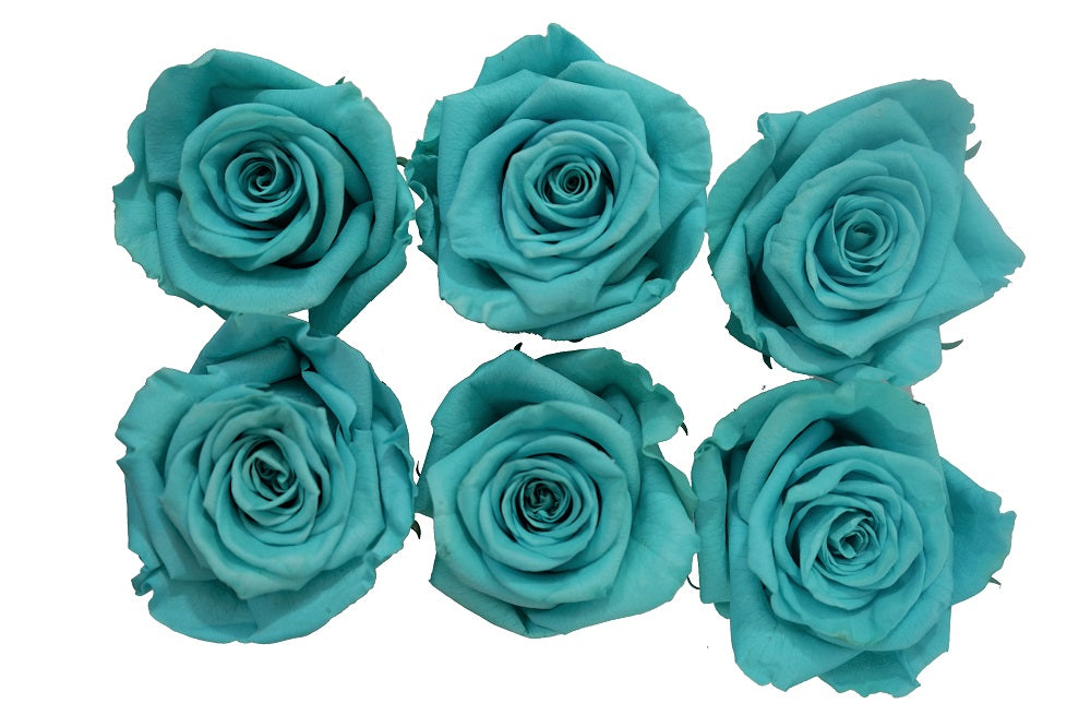 Large: Tiffanny  Preserved Rose L * Box of 6 Preserved Rose Heads