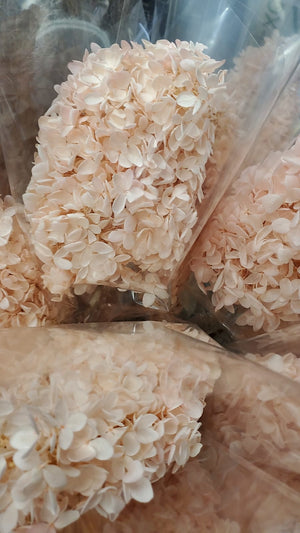 Hydrangeas: Light Pink Preserved Hydrangea * Box of 10 Preserved Hydrangea Head