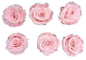 Medium: Baby Pink Preserved Rose * Box of 6 Preserved Rose Heads