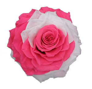 Jumbo rose: Bicolor Pink and White