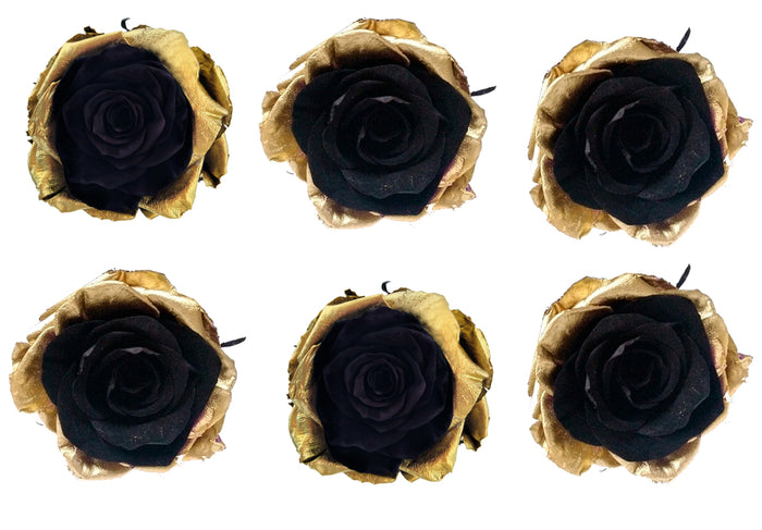 Large: Bicolor Gold and Black Preserved Rose *Box of 6 Preserved Rose Heads