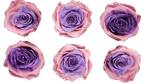 Large: Bicolor Pink and Purple Preserved Rose *Box of 6 Preserved Rose Heads