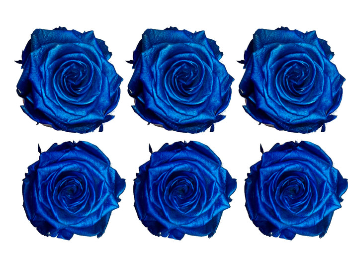 Medium: Blue Metallic  Preserved Rose * Box of 6 Preserved Rose Heads