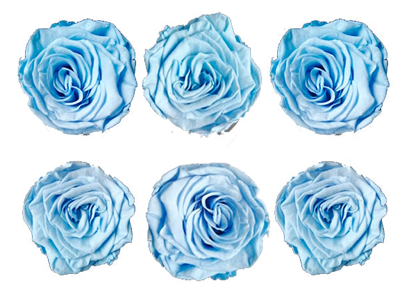 Medium: Baby Blue Dark Preserved Rose * Box of 6 Preserved Rose Heads
