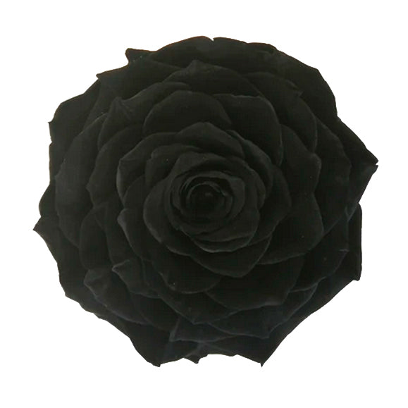 black night jumbo rose
