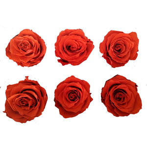 Large: Dark Orange *Box of 6 Preserved Rose Heads