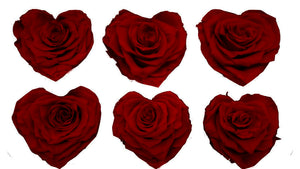 Large Heart: Dark Red Heart Shape  Preserved Rose *Box of 6 Preserved Rose Heart Heads