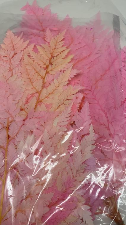 Stuff: Pink Ferns  I 30 bunches pack