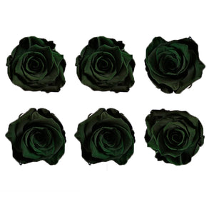Medium: Forest green Preserved Rose * Box of 6 Preserved Rose Heads