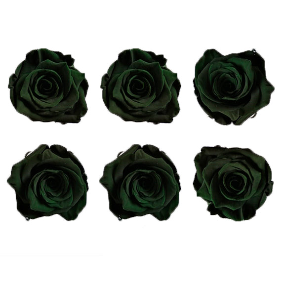 Large: Forest Green Preserved Rose  *Box of 6 Preserved Rose Heads