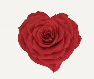 Heart rose: Red Coral Heart Shape Jumbo Preserved Rose