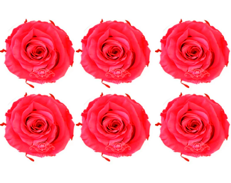 Large: Hot Pink Preserved Rose    *Box of 6 Preserved Rose Heads