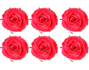 Medium: Hot Pink Preserved Rose * Box of 6 Preserved Rose Heads