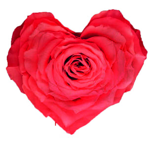 Heart rose: Hot Pink Heart Shape Jumbo Preserved Rose