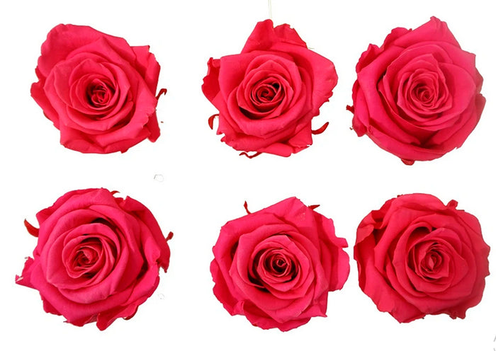 Large: Fuchsia Preserved * Box of 6 Preserved Rose Heads