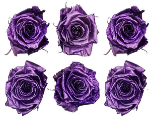 Medium: Lavender Metallic  Preserved Rose * Box of 6 Preserved Rose Heads