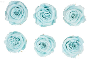 Large: Light Blue  Preserved Rose *Box of 6 Preserved Rose Heads