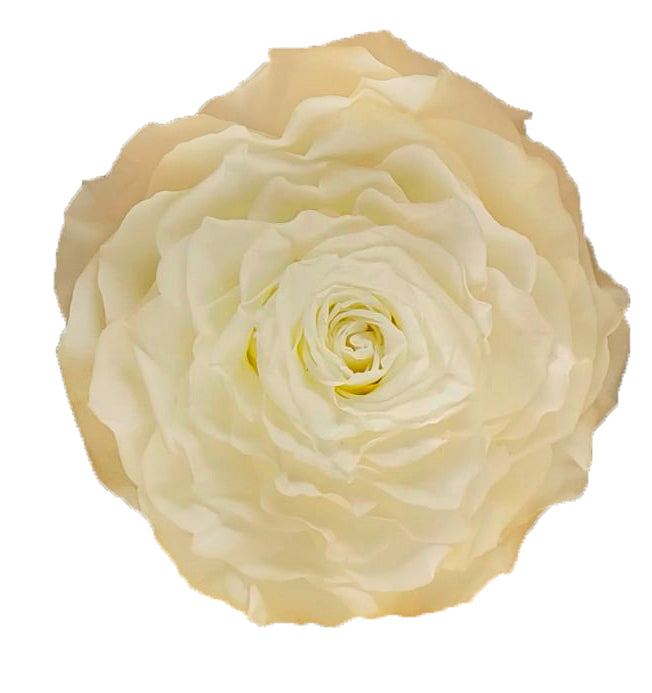 Jumbo rose: Light Peach Jumbo Rose