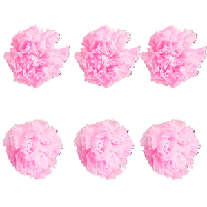 Carnations: Light Pink Preserved Carnation * Box of 6 Preserved Carnation Heads