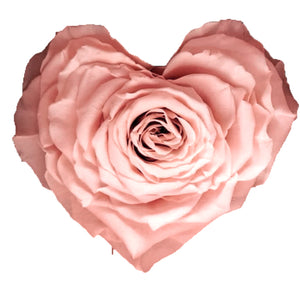 Heart rose: Light Pink Heart Shape Jumbo Preserved Rose
