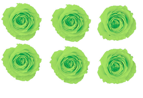 Large: Lime Green Preserved Rose L * Box of 6 Preserved Rose Heads