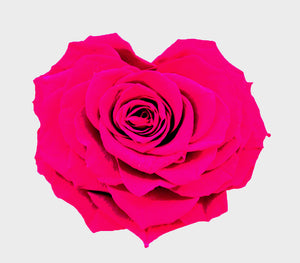 Heart rose: Magenta Heart Shape Jumbo Preserved Rose
