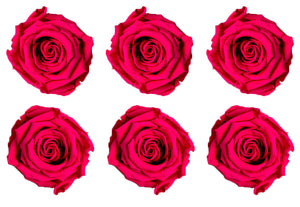 Preserved Roses Large (Available in all colors) 6 Pack