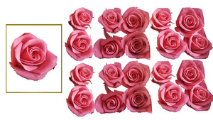 Mini Roses: Pink  Preserved Mini Rose * Box of 20 Preserved Rose Heads
