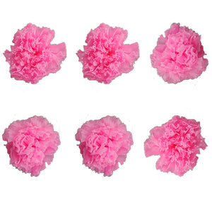 Carnations: Pink Preserved Carnation * Box of 6 Preserved Carnation Heads