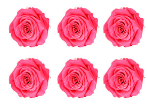 Large: Pink Preserved Rose * Box of 6 Preserved Rose Heads