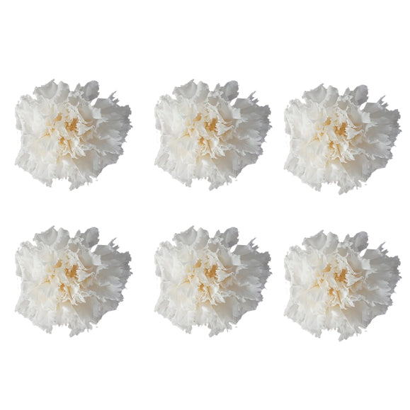 Carnations: Pure White Preserved Carnation * Box of 6 Preserved Carnation Heads