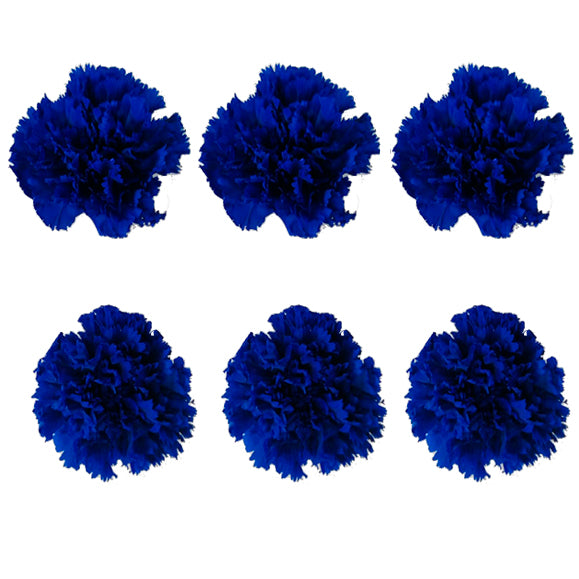 Carnations: Royal Blue Preserved Carnation * Box of 6 Preserved Carnation Heads