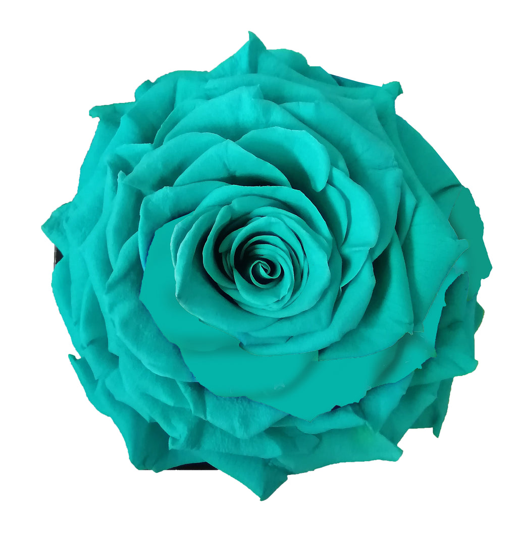 Jumbo rose: Tiffany Jumbo