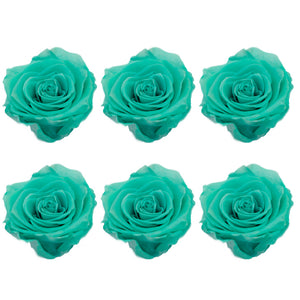 Medium: Turquoise Preserved Rose * Box of 6 Preserved Rose Heads