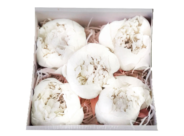 Peonies: Pure White Preserved Peonies * Box of 10 Preserved Peonie Heads
