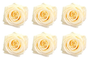 Large: White Chocolate  Preserved Rose * Box of 6 Preserved Rose Heads