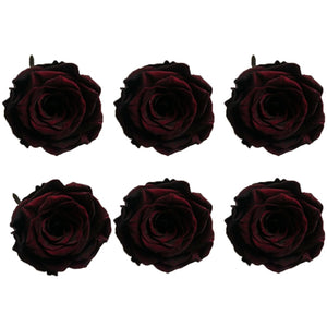 Medium: Wine * Box of 6 Preserved Rose Heads