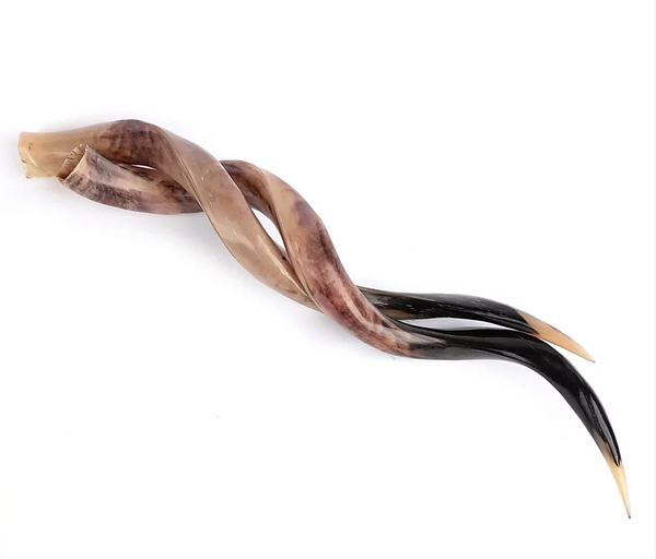Polished Kudu Horn