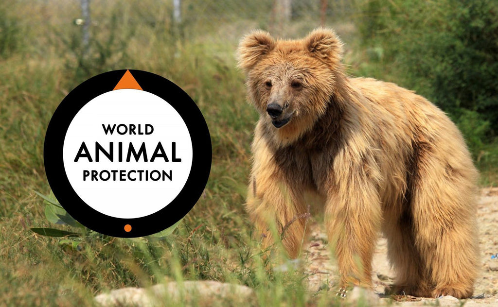Vi støter World Animal Protection Danmark