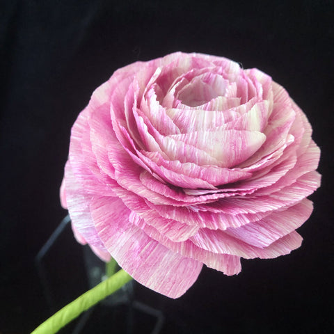 Paper EZ Ranunculus - Single Stem