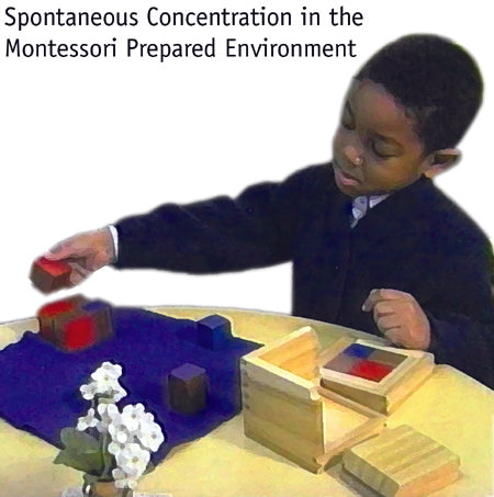 Spontaneous concentration in the Montessori Prepared Environment
