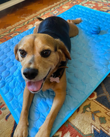 happy dog on cooling mat