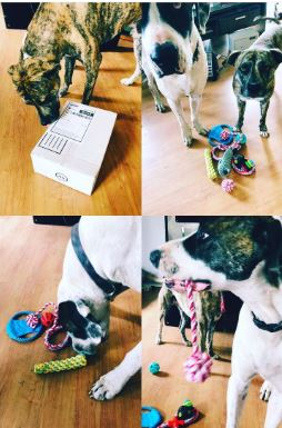 february instagram giveaway winners with their rope toy enrichment box