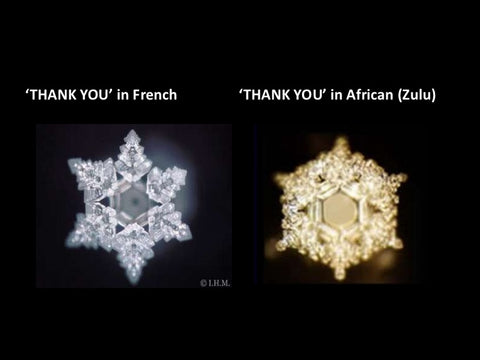 thank you dr emoto