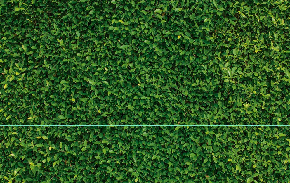 Green Grass Wall Premium Fabric Backdrop - For Rent