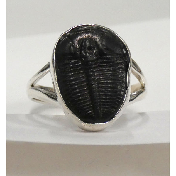 Natural Trilobite in Sterling Silver